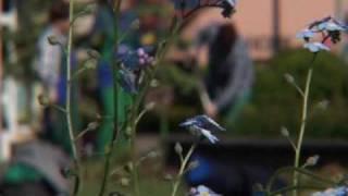 preview picture of video 'Rybnik. Miasto z ikrą.'