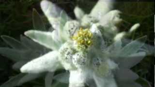 (HD 1080p) Edelweiss - Sound of Music, André Rieu / London Palladium Cast