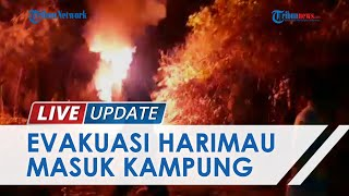 Video Harimau Masuk Kampung Warga Pedalaman Aceh Selatan, BKSDA Lakukan Penghalauan Pakai Mercon