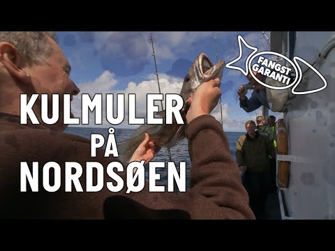 Kulmulefiskeri på Nordsøen med Fangstgaranti