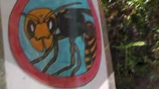 Beware of Suzumebachi Sign - Asian Giant Hornets in Japan