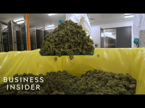 , title : 'What It's Like Inside A Canadian Marijuana Greenhouse