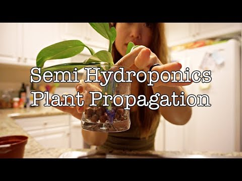 HOW TO PROPAGATE PLANTS IN LECA | 2 WAYS