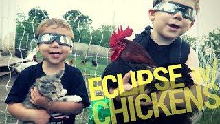 Solar Eclipsing Chickens