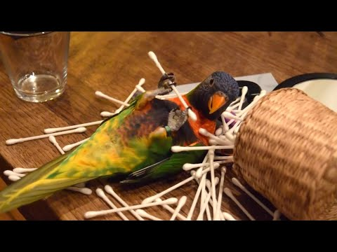 Parrots Are So Funny: A Hilarious Compilation!