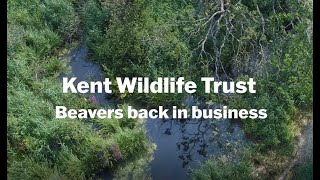 Thumbnail for Kent Wildlife Trust - Beavers Back in Business