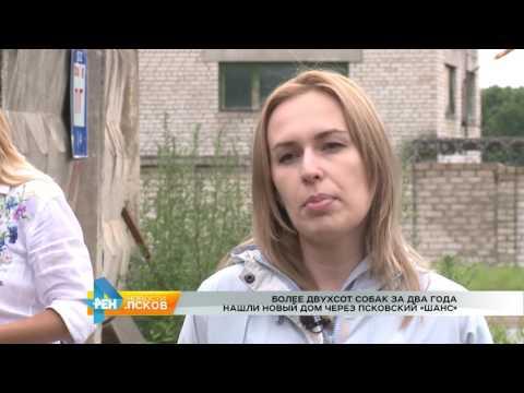 Новости Псков 18.07.2017 # Собаки находят дом через псковский «Шанс»