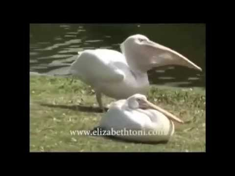 Come prendere cantarelli da helminths