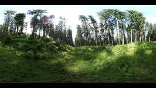 360 Degree video: Forest Glade