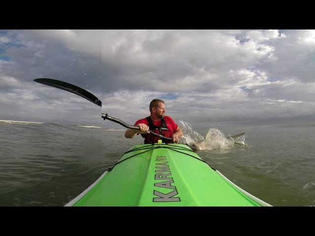 Kayak Surfing Shark Encounter