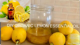 How To Make Organic Lemon Essential Oil - DIY Lemon Essential Oil For All Skins