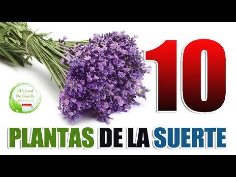 10 Plantas y Flores De La Suerte Que Debes Tener En Tu Casa