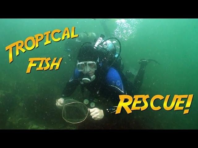 Tropical Fish Rescue   JONATHAN BIRD'S BLUE WORLD