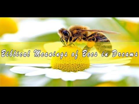 Biblical Meaning of Bees in Dreams & Interpretation