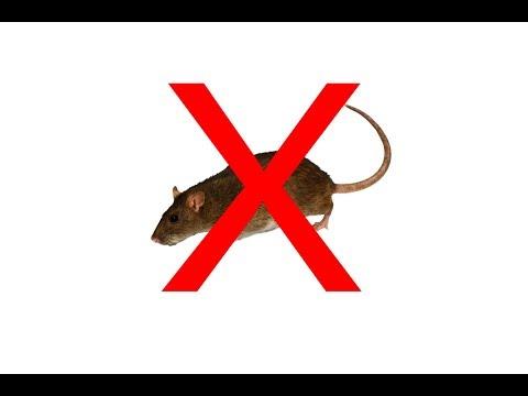 laboratóriumi egerek helmintjai