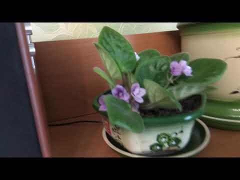 Обзор  комнатных цветочков первого октября