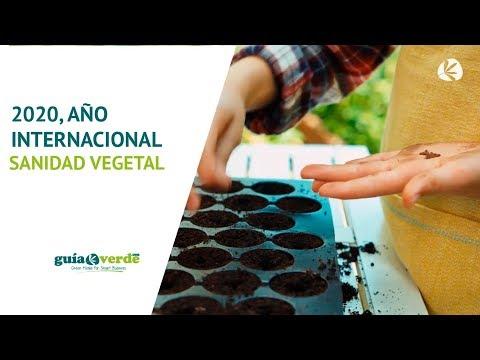 Fotograma del vídeo: 2020, Año internacional de la Sanidad Vegetal