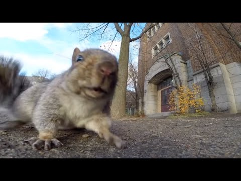Why You Shouldn't Trust a Squirrel Near a GoPro