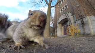 Squirrel steals GoPro and carries it up a tree