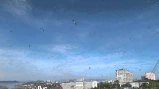 Чайки захватили небо )