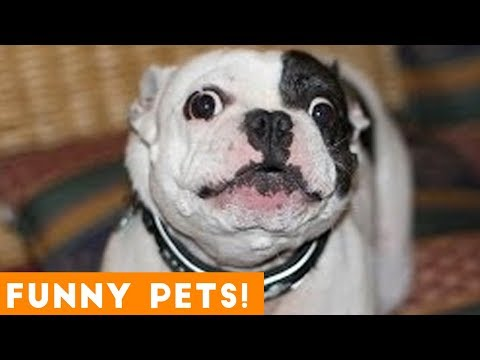 Funniest Pets & Animals of the Week Compilation April 2018 | Hilarious Try  Not to Laugh