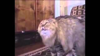 Best of nonono cat