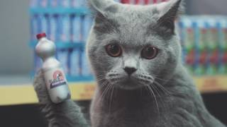коты захватили магазин