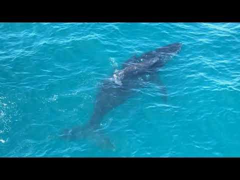 Baleias-jubarte visitam plataformas e emocionam colaboradores