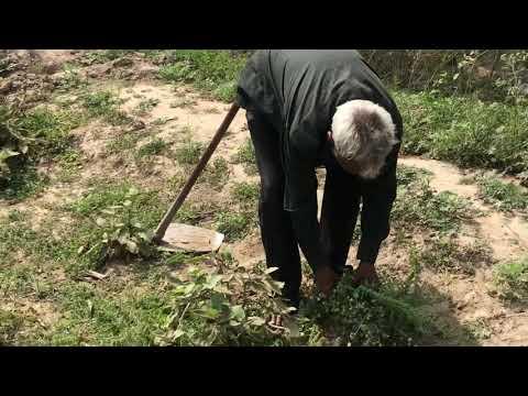 Weed Management In Organic Farming | Ajay Tyagi