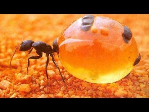 Beim Parasiten die säurehaltige Umgebung