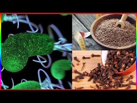 Das Reinigen der Parasiten in sotschi
