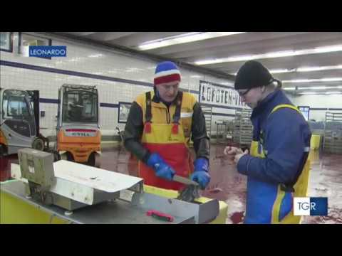 La caccia e la pesca in Russia una mostra al Centro espositivo di ogni Russia in