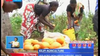Kilifi's Burangi intergrated food security project see residents thrive with acres of maize