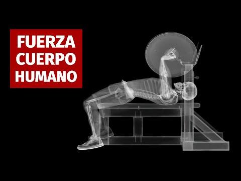 La fuera del cuerpo humano en datos