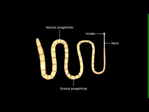 Giardia เป็นภาพ