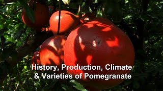 History, Production, Climate & Varieties of Pomegranate