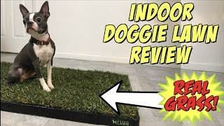 Indoor Doggie Lawn Review | Puppy Potty Pad Alternative