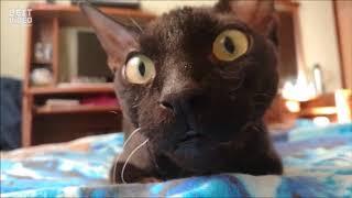 Приколы ржака самые смешные до слез про животных котов +18 2018, 2019г.
