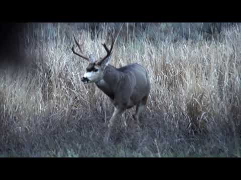 2019 Archer's Choice – Show 6 – Bowhunting WA Mule Deer with Okanogan Valley Guide Service