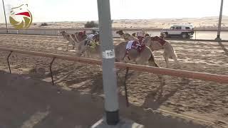 سباق الحقاقة - سيف العرب 15-11-2018 - ش14 مرفوق لـ سالم سعيد بن كاسب المسافري 4:30 تحميل MP3