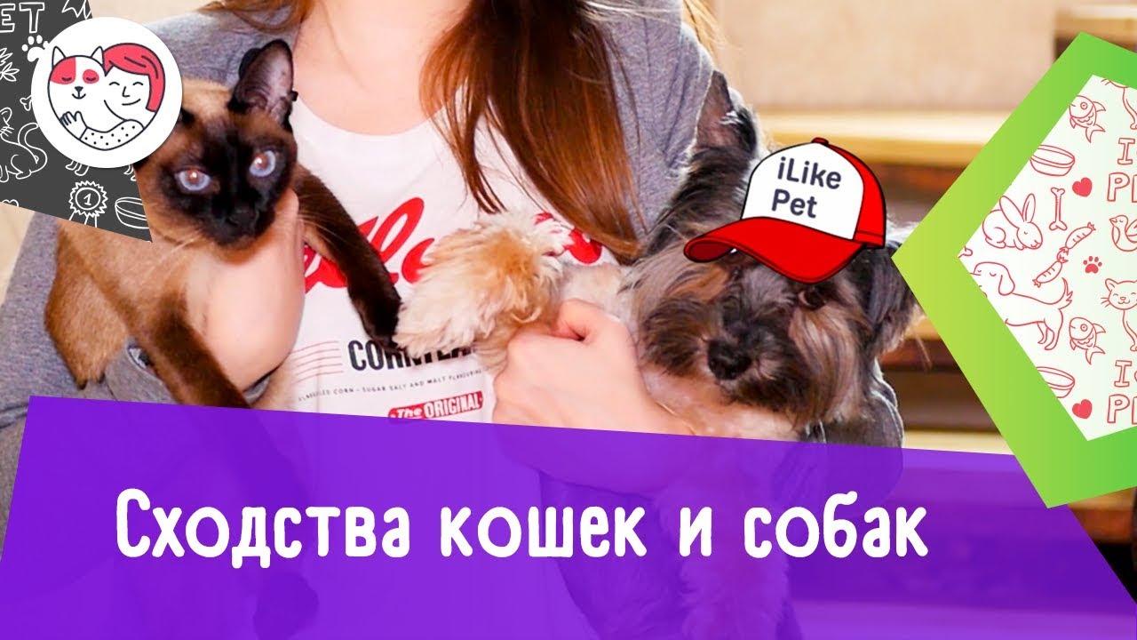 5 сходств кошек и собак