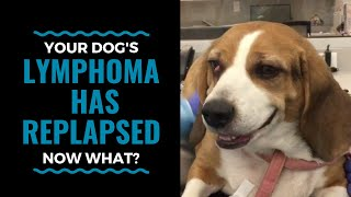 Your Dog's Lymphoma Has Relapsed, Now What? Vlog 61
