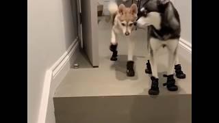 Lustige Videos. Mode für Hunde. Мода для собак. Fashion for dogs