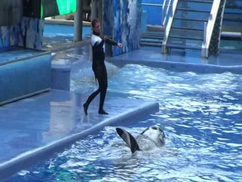 Dedicated to Dawn Brancheau who was killed February 24th, 2010 by Tilikum.