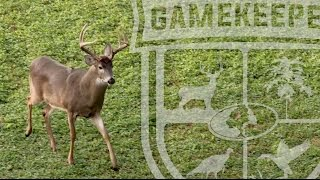 How to Age a Whitetail Deer Live in the Field
