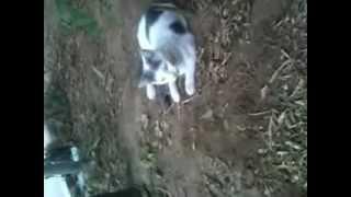 preview picture of video 'من قصر البخاري القط مع الفار'
