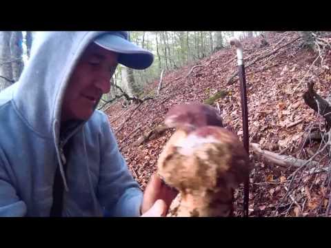 YouTube che guarire un fungo di unghie