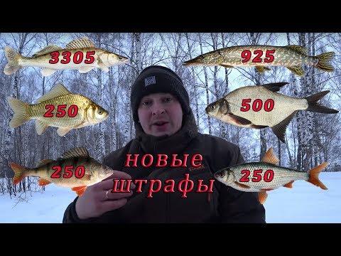 Штрафы за рыбалку 2020. Рыболовные правила 2020.Новые правила рыболовства 2019.Новый закон.