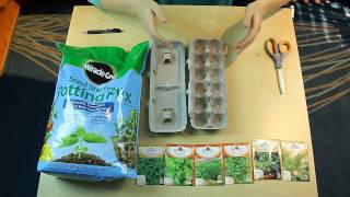 How To Plant Seeds In Egg Cartons