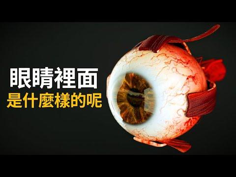 眼睛的構造